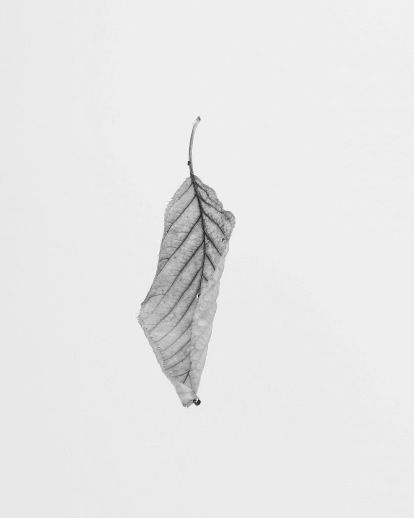 Black and white photo of a leaf, symbolizing the winter blues